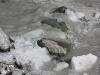 Fox Glacier: Fox Glacier