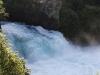 Huka Falls: Zajíc