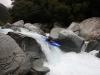 Arahura - Dent Falls: Zajíc
