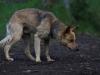 Rio Fuy: další zvědavý pes