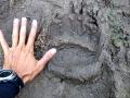Sumulta: to byl asi větší medvěd, naštěstí jsme se nepotkali